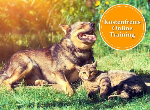 Gratis Training 2