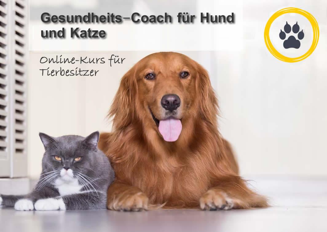 Kurs Gesundheit für Hund Katze