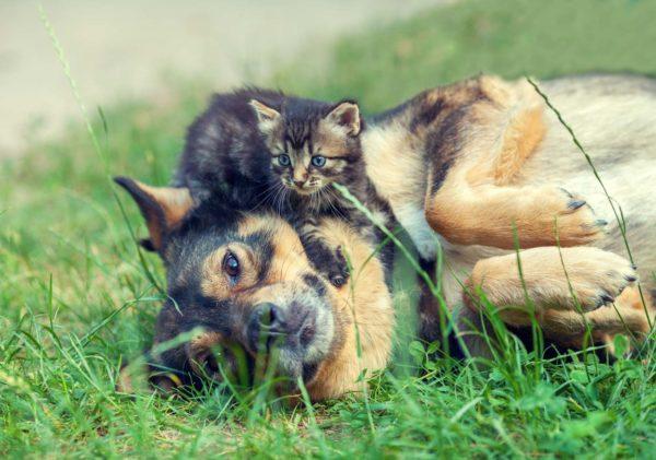 Gesundheit-Coach für Hund und Katze 3