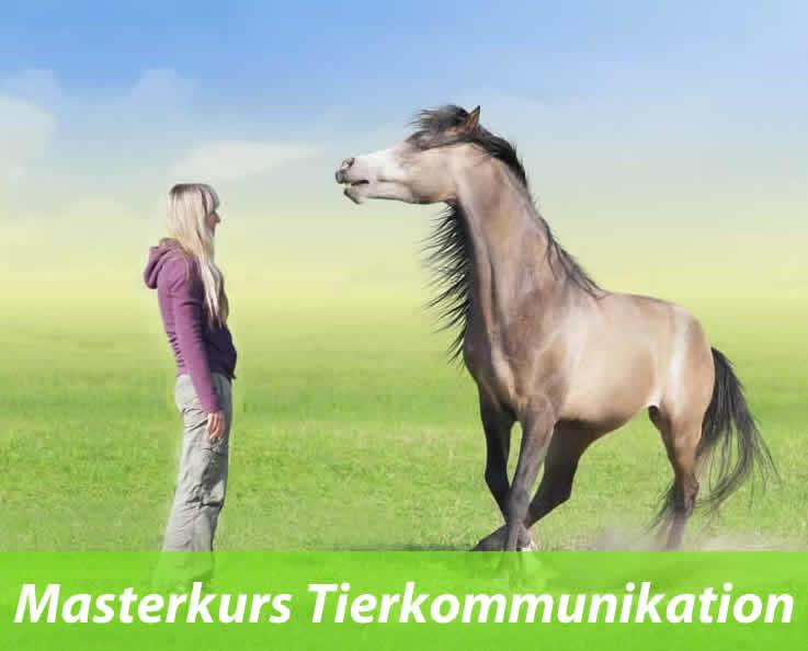 Tierkommunikation-Ausbildung 2