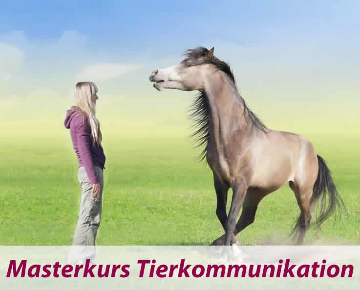 Masterkurs