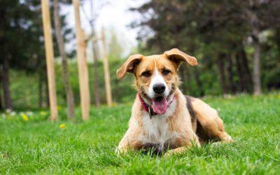 Leon – ein Tierschutzhund mit Vertrauensproblem