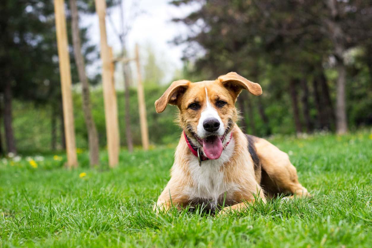 Leon-ein-Tierschutzhund-mit-Vertrauensproblem