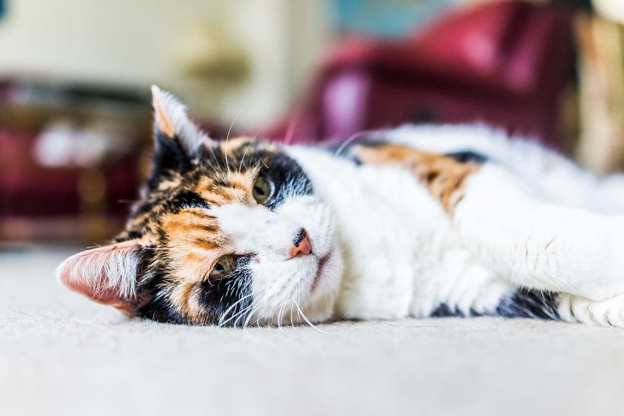 Shila – eine Katze am Anfang ihres letzten Weges