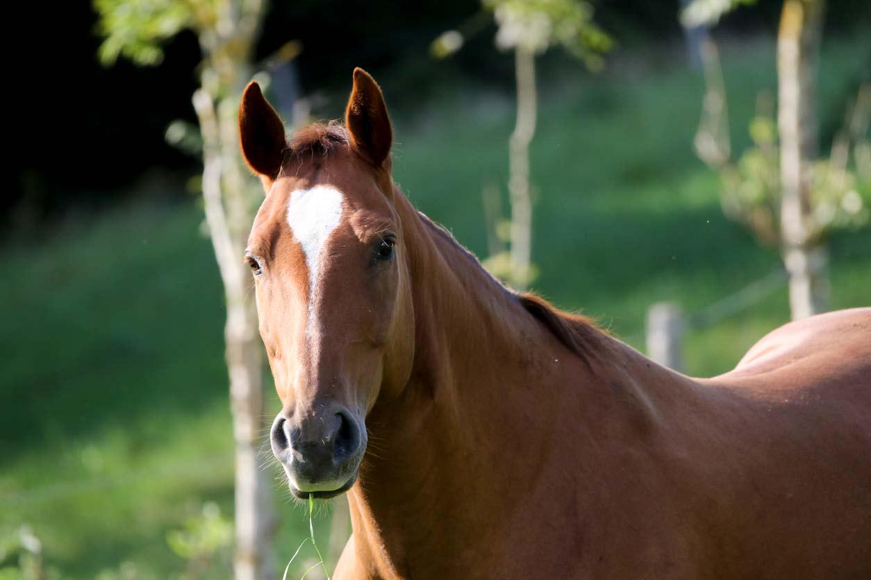 Sunlight–Quarterhorse-Stute-mit-physischen-Problemen