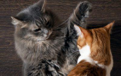 Lilli und Eddie – Zwistigkeiten zweier Katzen
