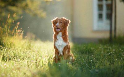 Kann Oskar sich vorstellen, ein Schulhund zu sein?